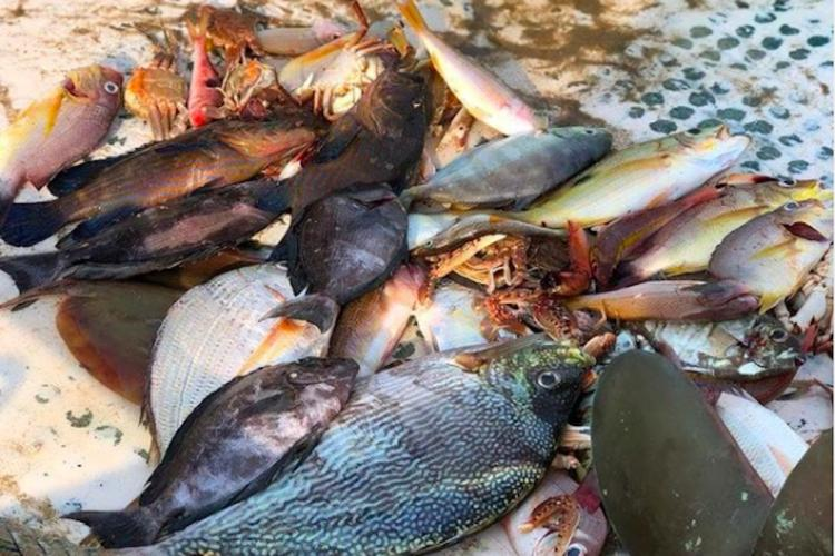 Beyond Vanjaram and Pomfret A Chennai collective promotes sustainable seafood