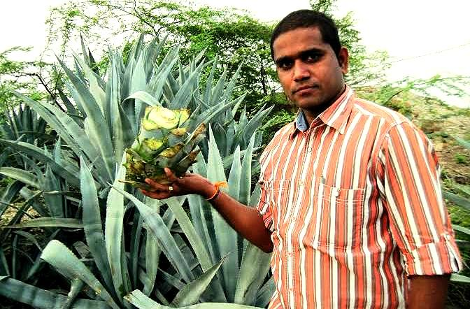 India could soon be downing desi tequila shots brewed in Andhra