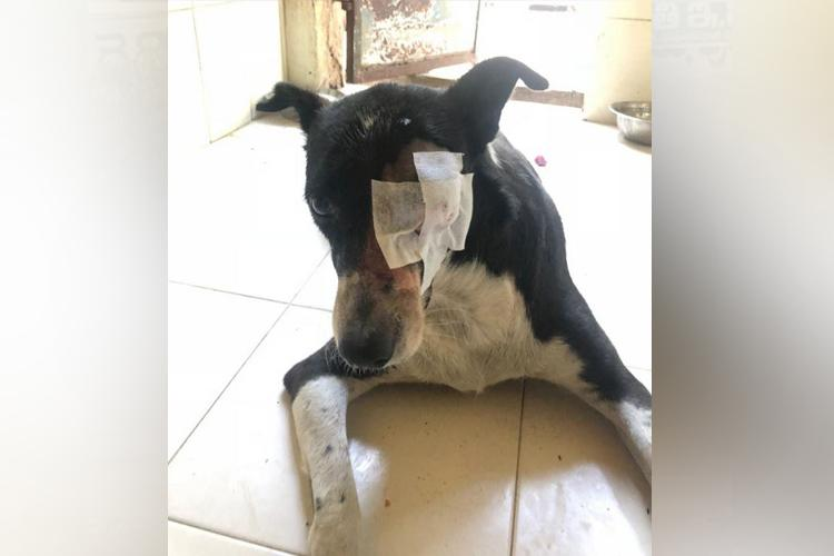 Chennai man arrested for throwing brick on dog causing it to lose an eye