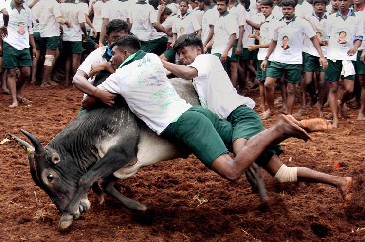 Tit for Tat TN youth organization demands ban on PETA in India
