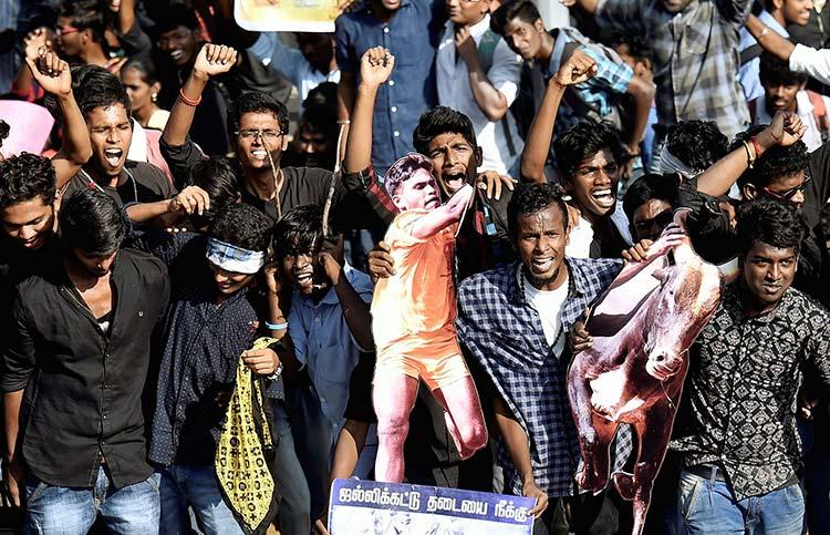 Jallikattu to be held in many places on Sunday OPS says its a dream come true
