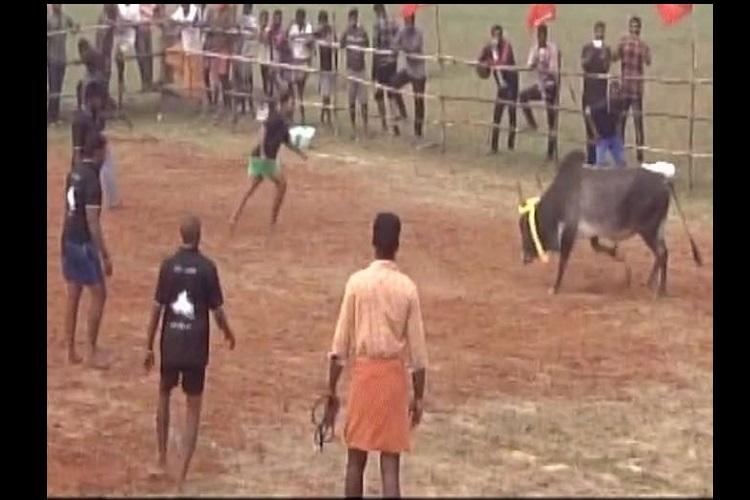 Who cares about SC they ask Jallikattu held in TN village