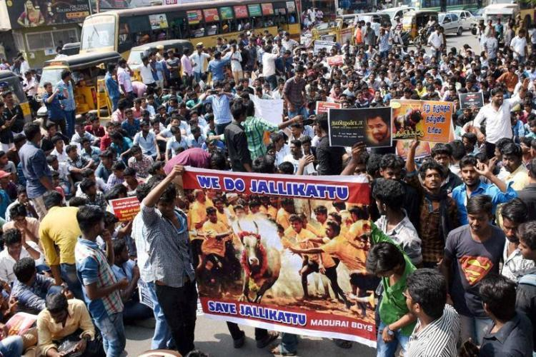 Jallikattu Why the campaign must appeal to Indian govt and judiciary not just attack PETA