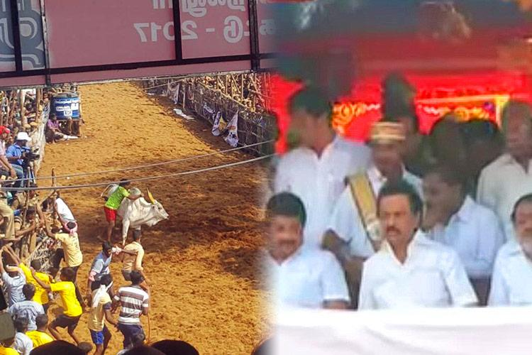 Alanganallur comes alive for jallikattu as politicians celebs turn up to watch