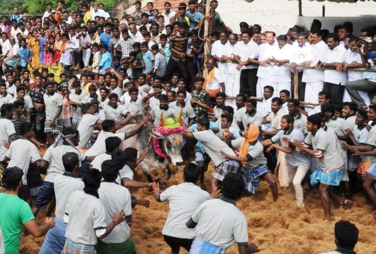 Two die after being hit by bulls in Pudukottai on first day of legal jallikattu