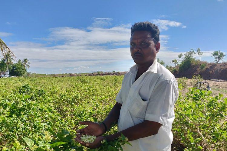 Water crisis hits jasmine farmers in Madurai many give up cultivation