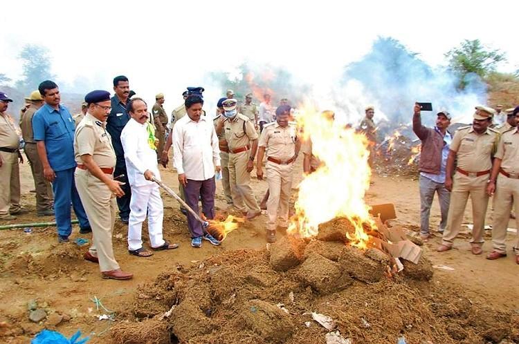 Andhra officials destroy 7800 kg of ganja Minister warns against cultivating crop