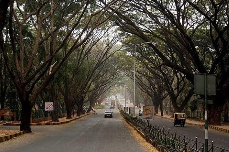 1800 trees to be felled in Bengaluru Activists call public hearing a sham