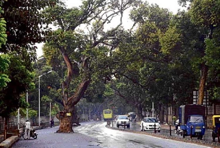 30K emails to save 112 trees Will Bengaluru officials listen to citizens on road widening