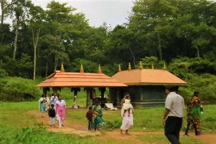 In Kerala a community is sowing seeds of conservation to save rare trees