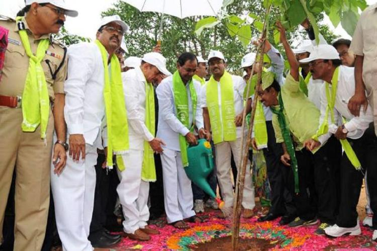 KCR dressed in white planting a sapling as part of Haritha Haram