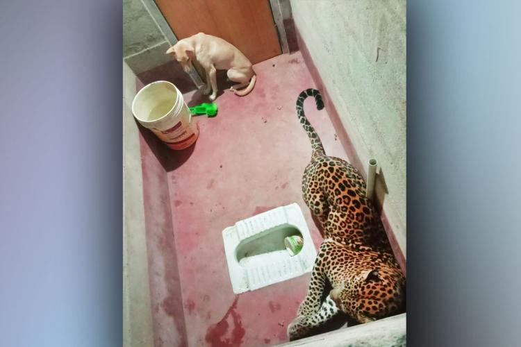 A dog and leopard trapped together in a toilet in Karnataka