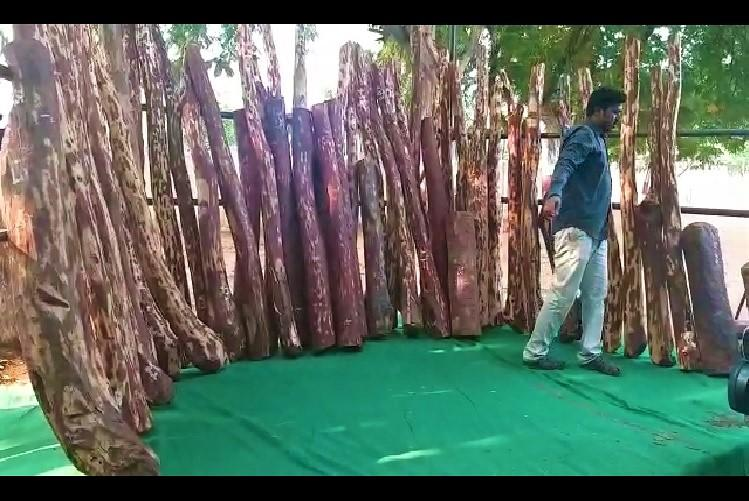Red sanders smugglers held with Rs 5 cr worth logs in Andhra
