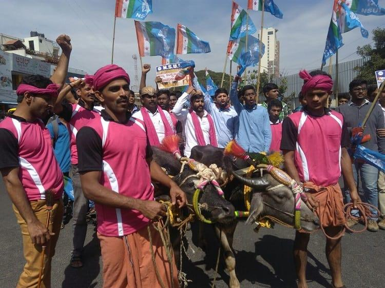 After jallikattu victory in TN kambala beku gains ground in Ktaka