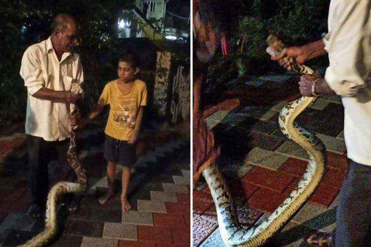 A collage of Sankalp in a yellow tshirt and shorts and a local resident with the python that was captured after it bit the boy