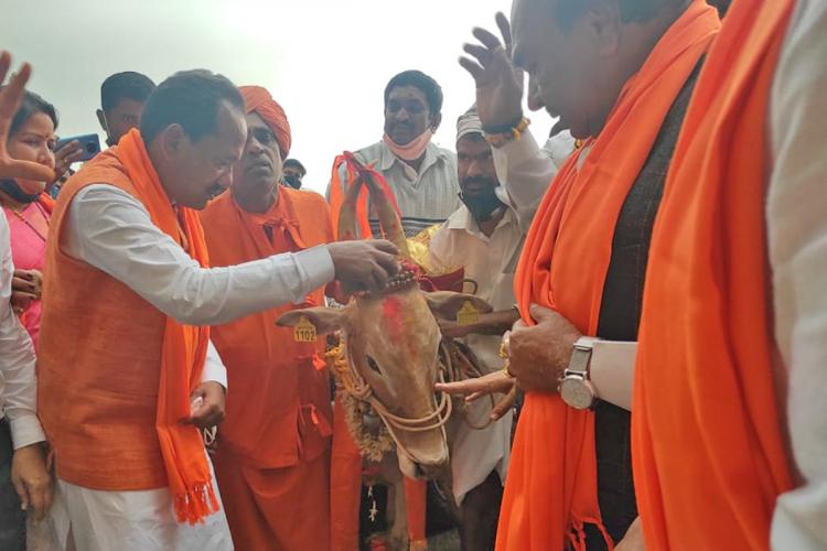 BJP leaders led by Animal Husbandry Minister Prabhu Chavan praying to an ox on sidelines of anti-cow slaughter bill
