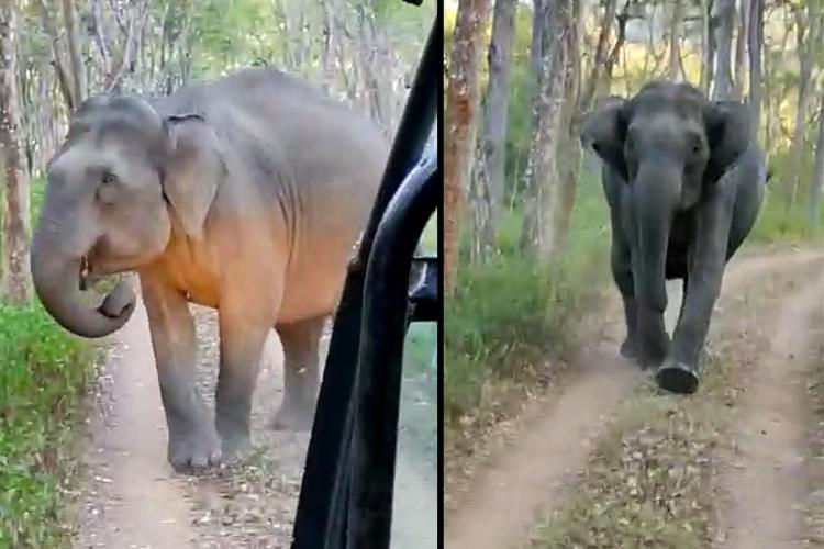 A collage of two screenshots showing tourists on a safari tour in BR Hills Karnataka caught between two elephants
