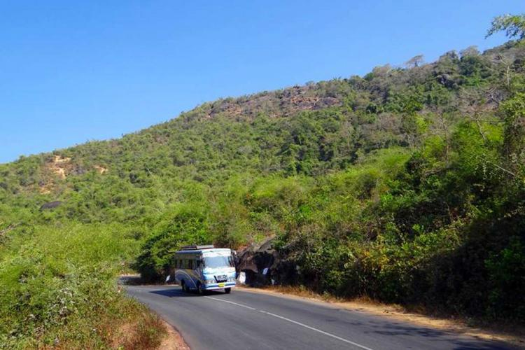 A bus seen plying on a highway On either side of the road is dense vegetation while a hill can be seen in the background