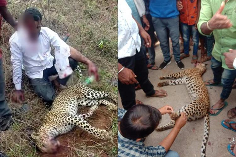 A collage of an image of the Karnataka man who killed the leopard and the body of the leopard