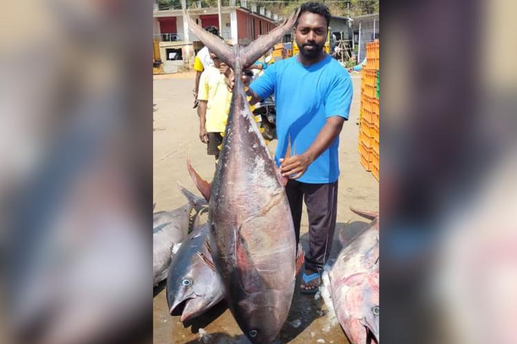 Rare man-sized tuna fish caught by fishermen in Karnatakas Karwar