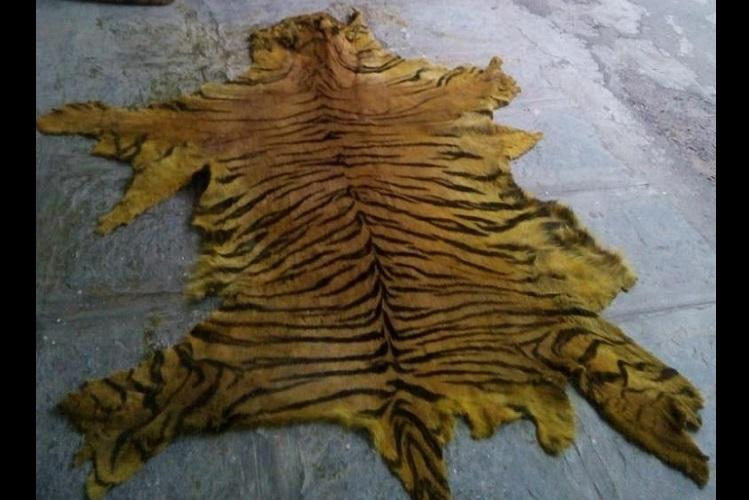 2 tigers killed in 20 days in reserve Is Telangana doing enough to protect wildlife