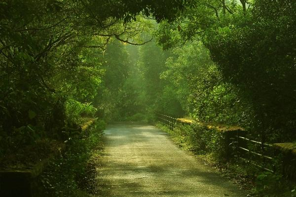 Travel through Gods own country Kerala on your Instagram account