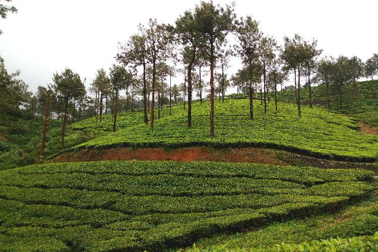 Kerala Tourism today bagged six National Tourism awards for 2014-15 in the marketing category for states