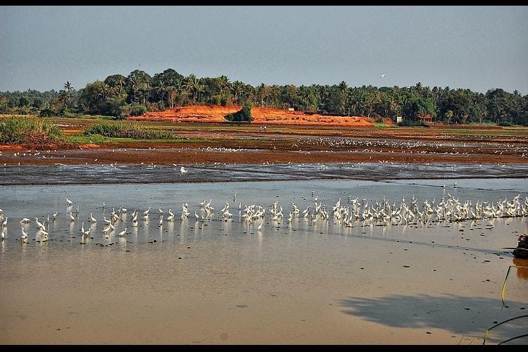 Keralas wetlands under threat from unscientific land use deforestation Experts