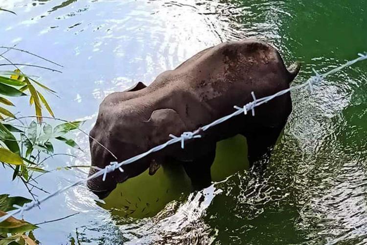 Elephant killing in Kerala Leaders slam communal propaganda against Malappuram