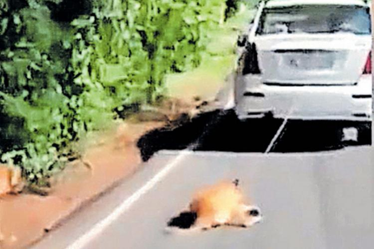 A dog sitting on the road and tied to a car