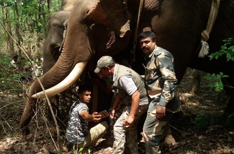 Radio collars fitted on elephants of different herds in Kodagu to track movement