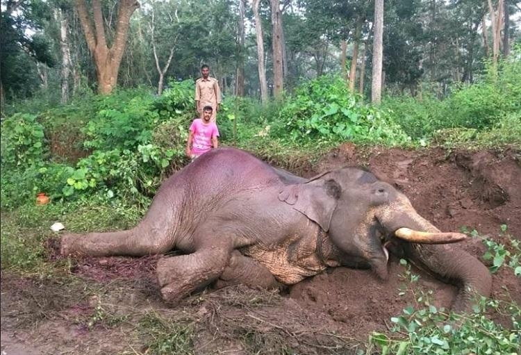 Speeding bus kills Rowdy Ranga, 46-year-old elephant, near Nagarhole