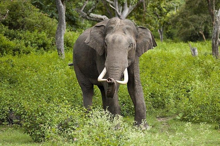 13-year-old boy 2 women injured after elephant attacks in Kodagu