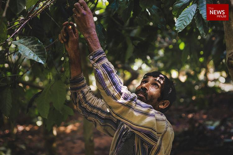 Coorgs bitter brew Bonded labour in Indias biggest coffee estates