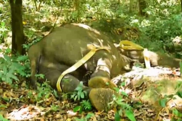 3 arrested for killing elephant with explosives in Keralas Kollam