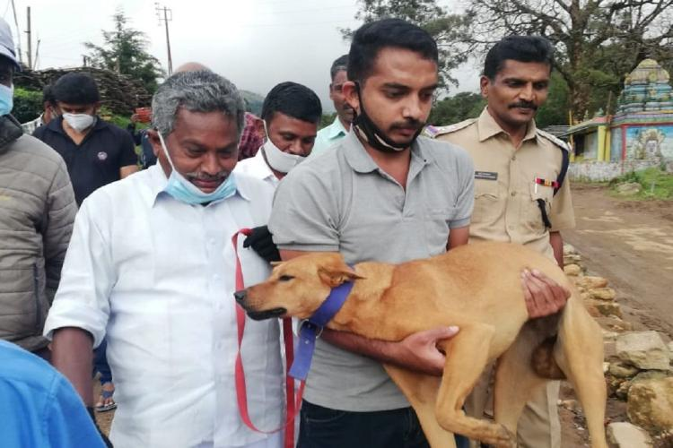 Koovi the dog of Pettimudi who found her owner