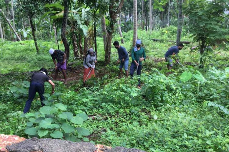 Young men clearing bushes while working under Mahatma Gandhi National Rural Employment Guarantee Act Six people in the photo are carrying a hoe and are cutting down wild growth in the plot