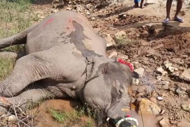 The carcass of elephant shot dead in Krishnagiri