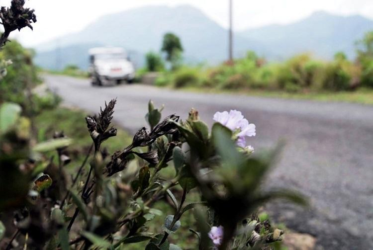 Kerala floods Tourism hit even as Munnar waits for Neelakurinji to bloom