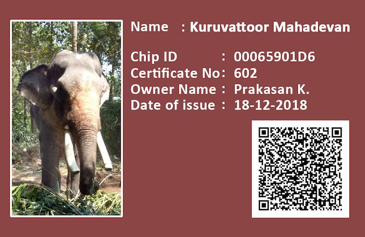 Kerala now has an ID card and DNA database for all its captive elephants