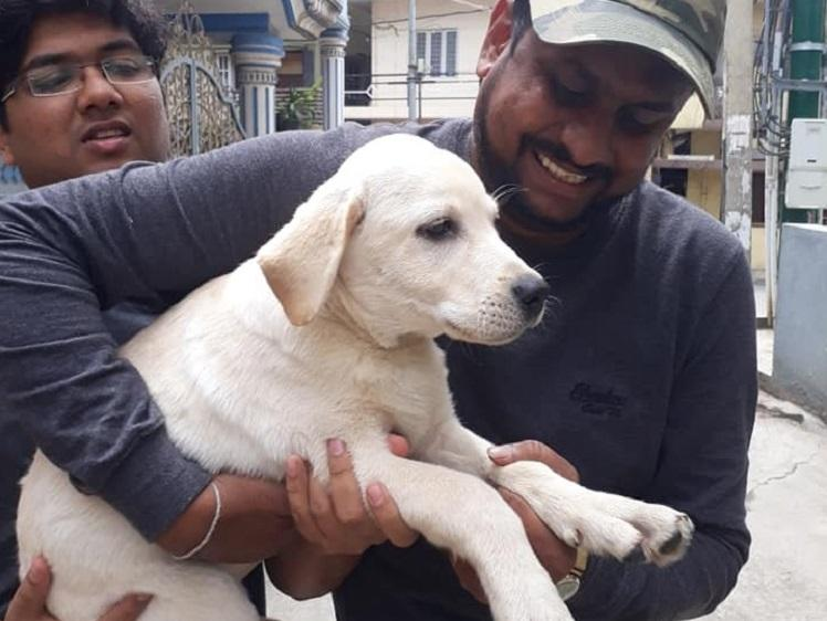 Labrador pup rescued owners booked for neglect in Bengaluru