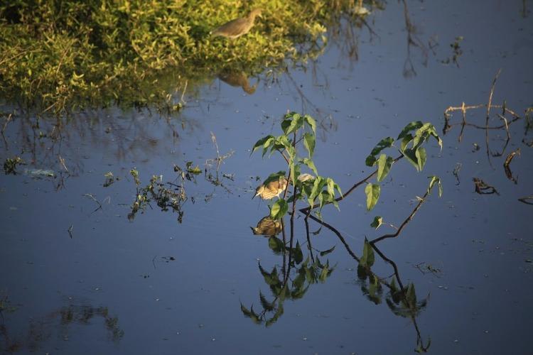 Suspecting disloyalty Telangana man kills teenage girlfriend dumps her body into lake
