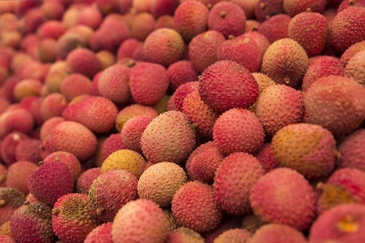 Love litchis Toxins in the fruit to blame for thousands of child deaths in Bihar