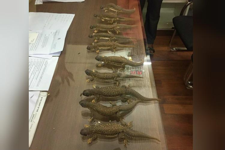 10 spiny-tailed lizards being sold as aphrodisiacs rescued by Bengaluru cops
