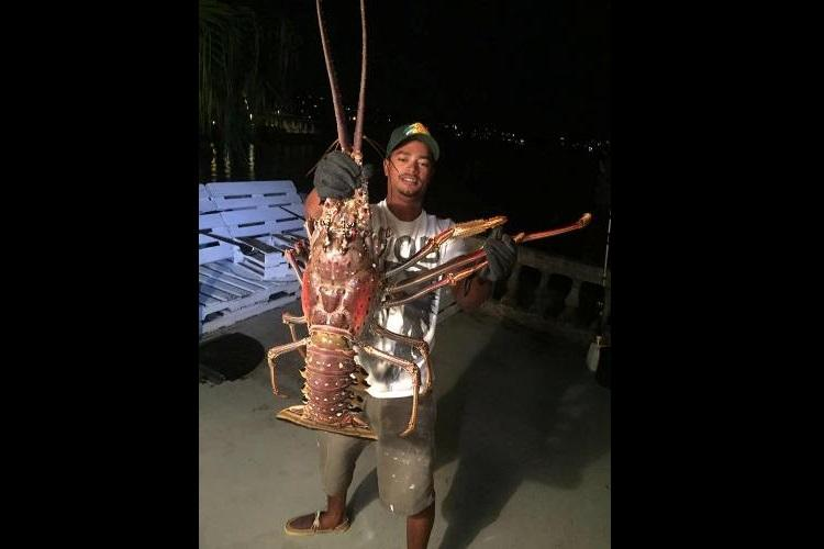 Monster Lobster 14-pound giant found near Bermuda coast later released