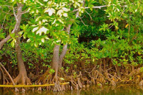 Mangrove Conservation project kicks off in Kerala