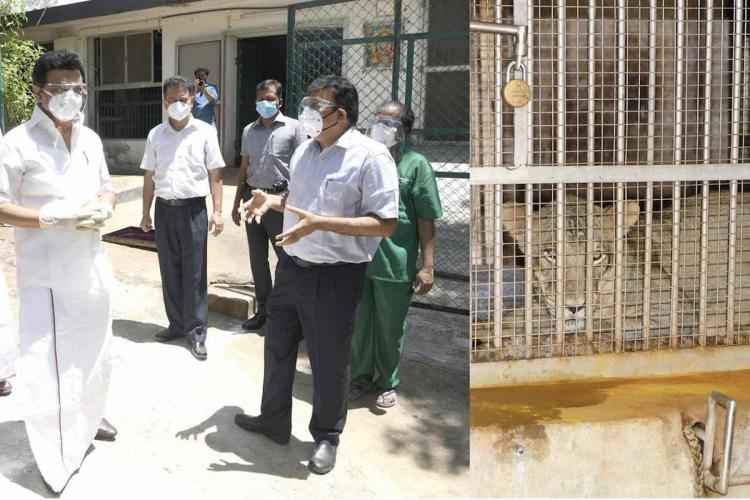 MK stalin at Vandalur Zoos lion enclosure where lions have been infected with COVID-19