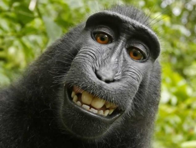 Monkey owns right to his selfie PETA