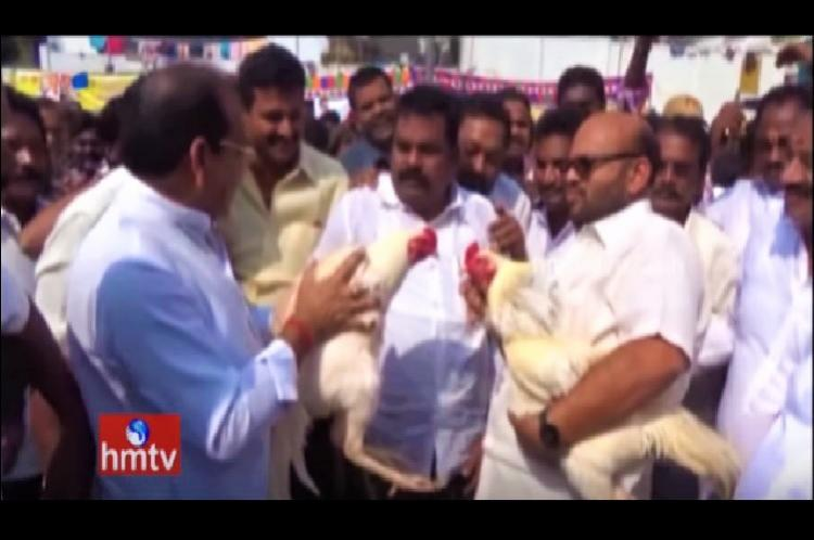Despite HC ban TDP MP and MLA participate in cockfight in Andhra