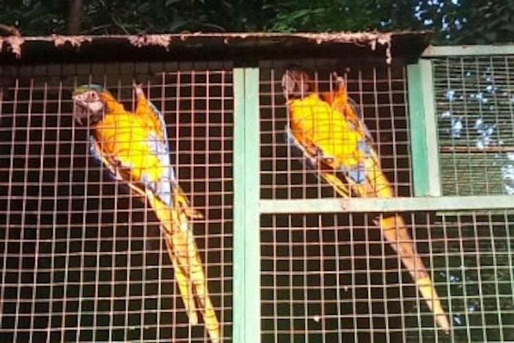 Toucans to marmoset monkeys Meet the rare animals housed in a rural Palakkad compound